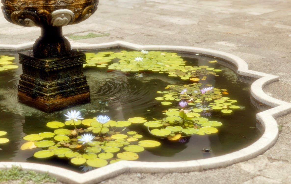 fountain, lily pad, soft focus