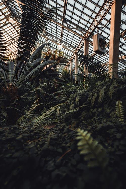 açık, ağaç, Bahçe, bitki örtüsü içeren Ücretsiz stok fotoğraf