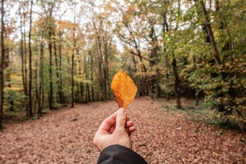 公園, 天性, 季節, 專注 的 免费素材照片