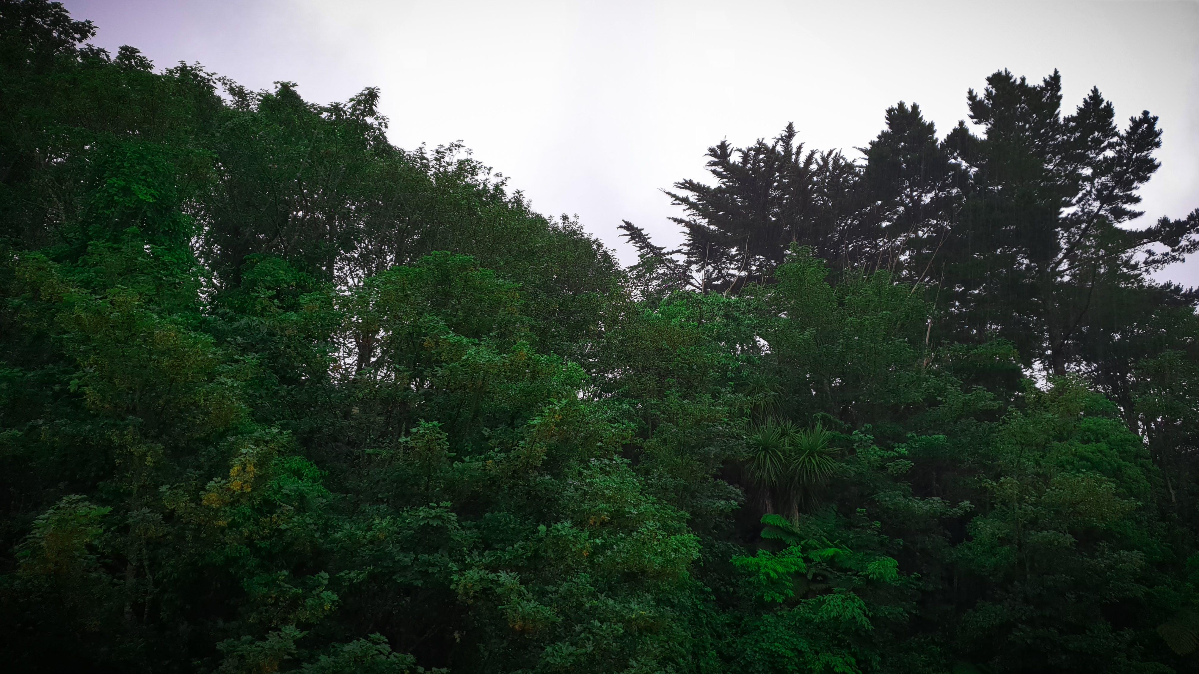 Free stock photo of bush, canopy, cloudy, foliage