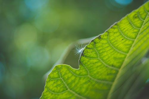 Free stock photo of Big leaf, fur