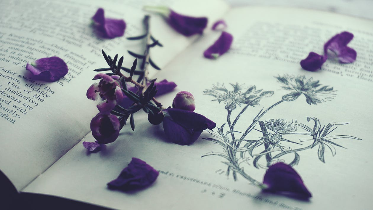 Purple Petals on Opened Book