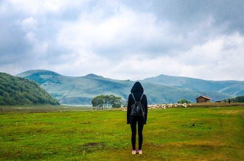 Kostnadsfri bild av fält, grässlätt, idyllisk, landskap