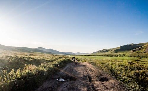 Foto d'estoc gratuïta de bassal, camí sense asfaltar, camp, camps de cultiu
