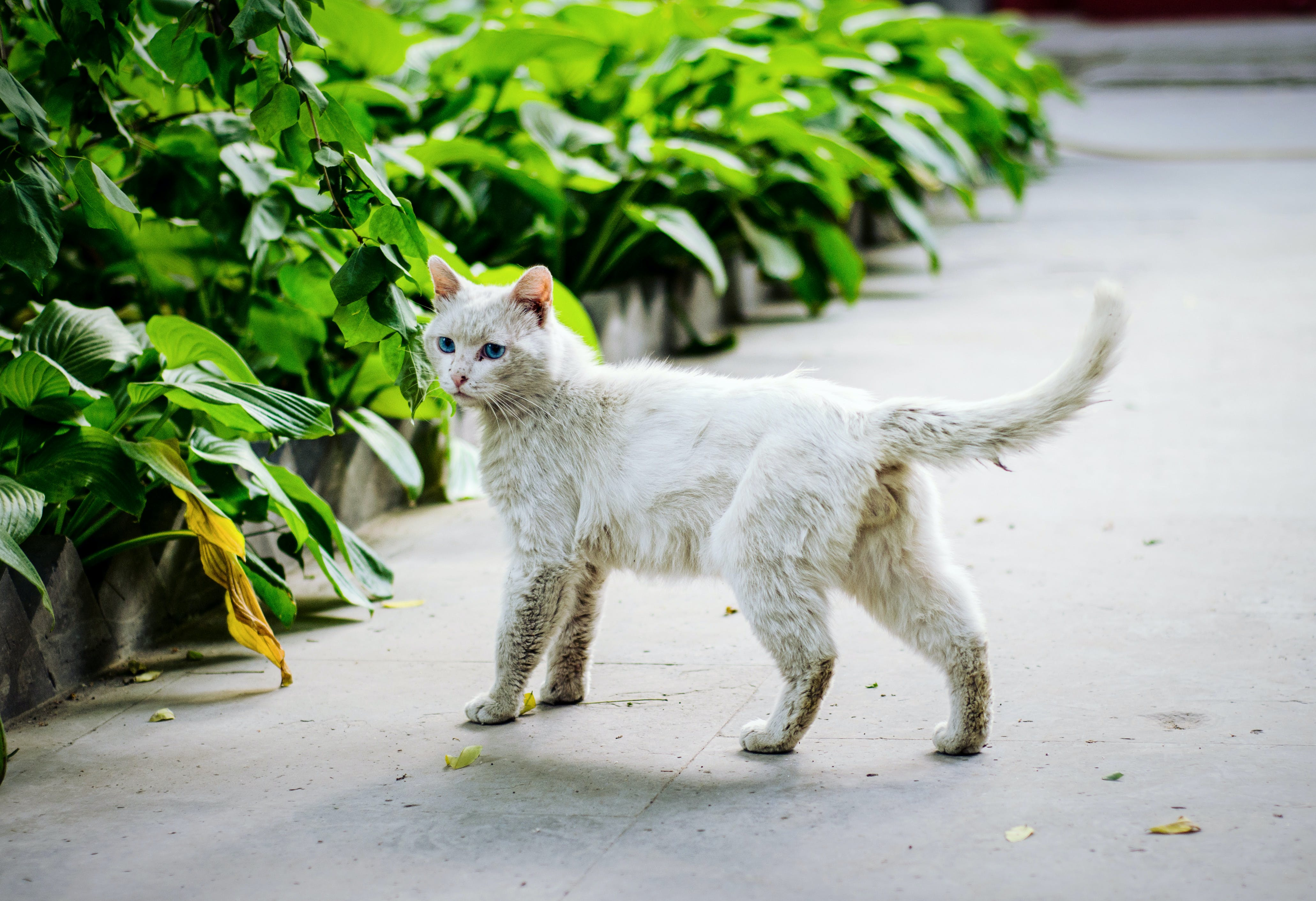 Darmowe zdjęcie z galerii z koci, kociak, kot, kotek