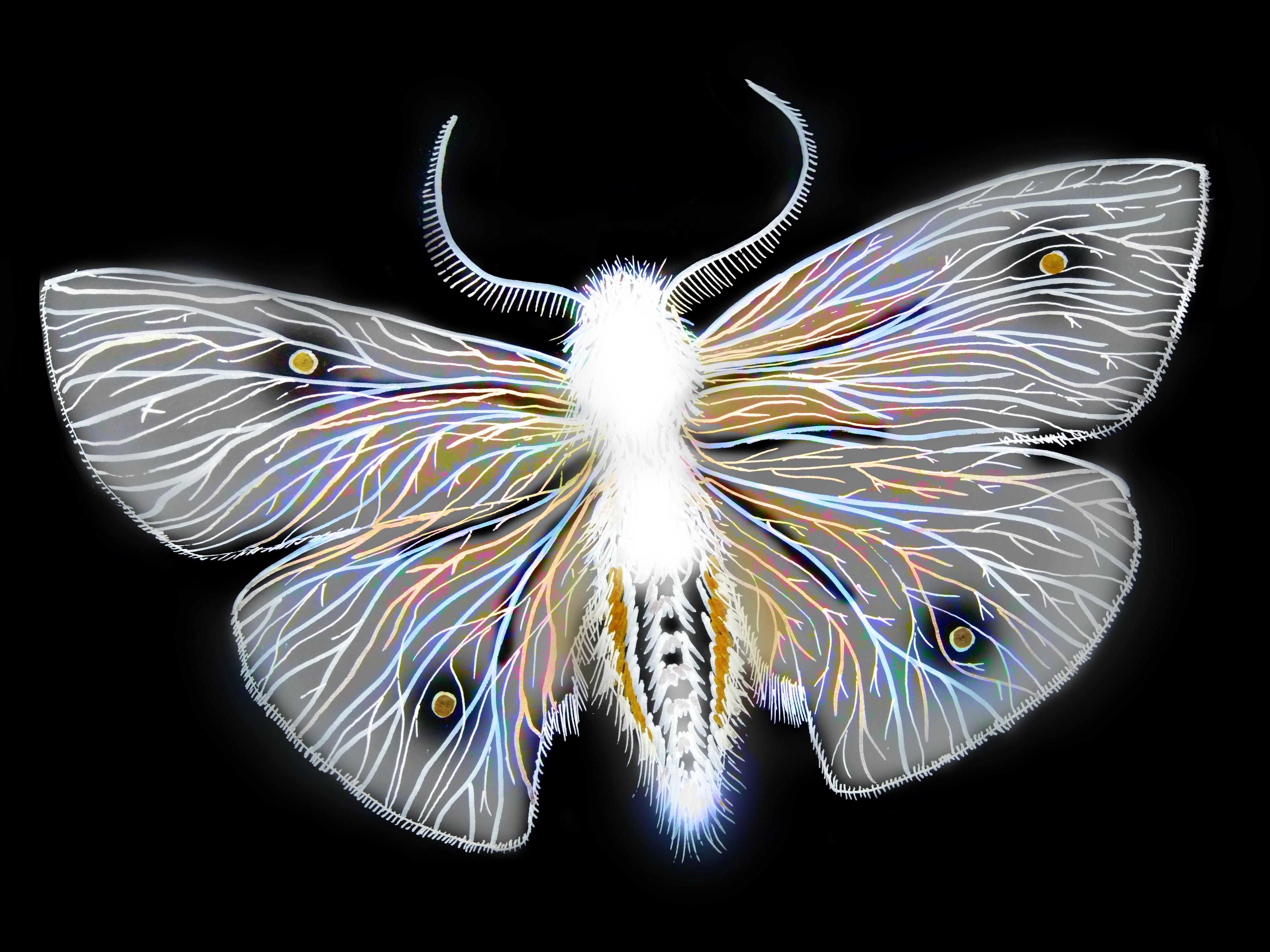 of moth