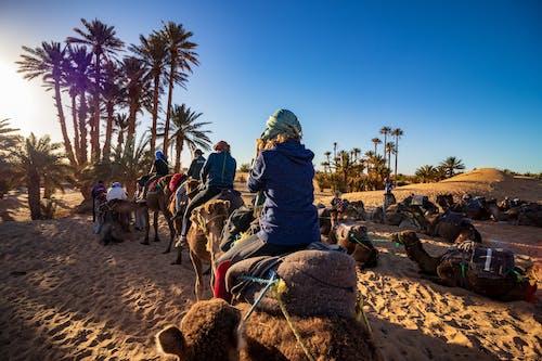 Бесплатное стоковое фото с верблюды, деревья, дневной свет, животные