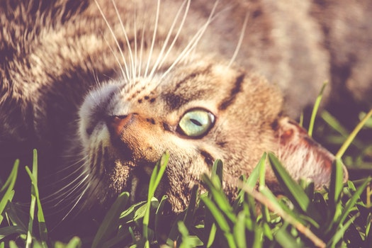 Brown Cat Laying on Grass
