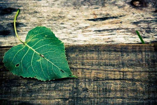 Green Leaf in Top of Brown Wooden Surface