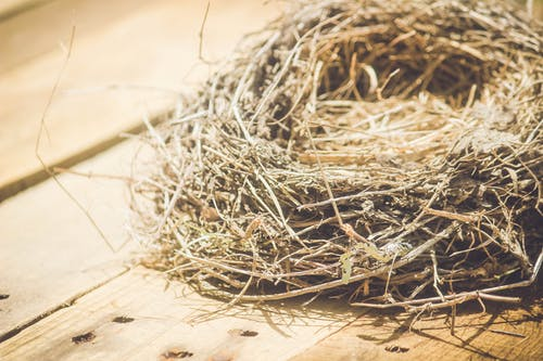 Free stock photo of bird nest
