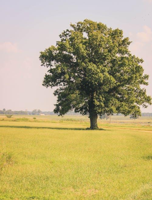 Free stock photo of clear field, farm, farm landscape