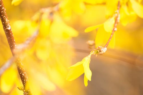 Free stock photo of yellow floral, yellow flowers