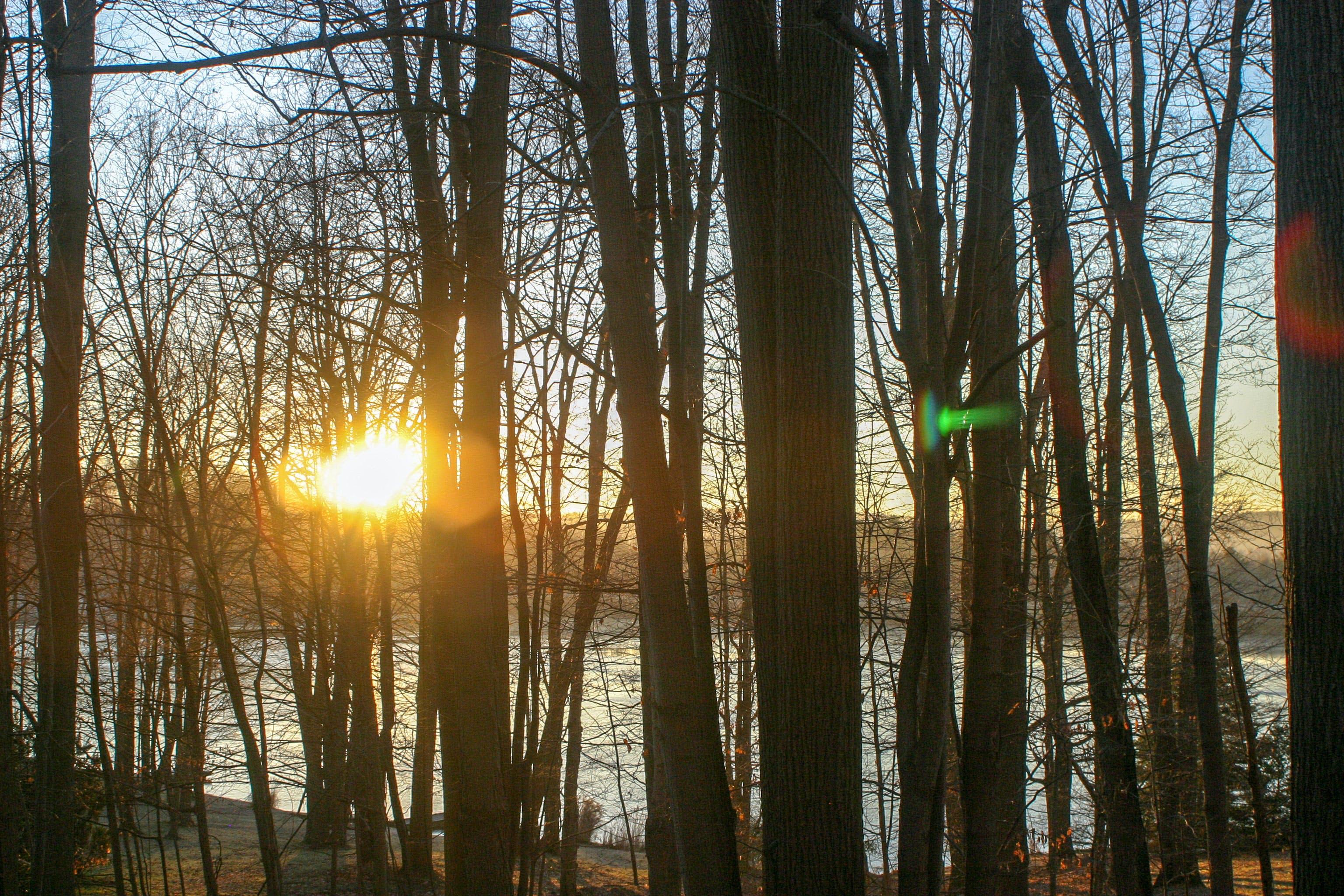 Kostenloses Stock Foto zu bäume, draussen, sonnenaufgang, sonnenuntergang