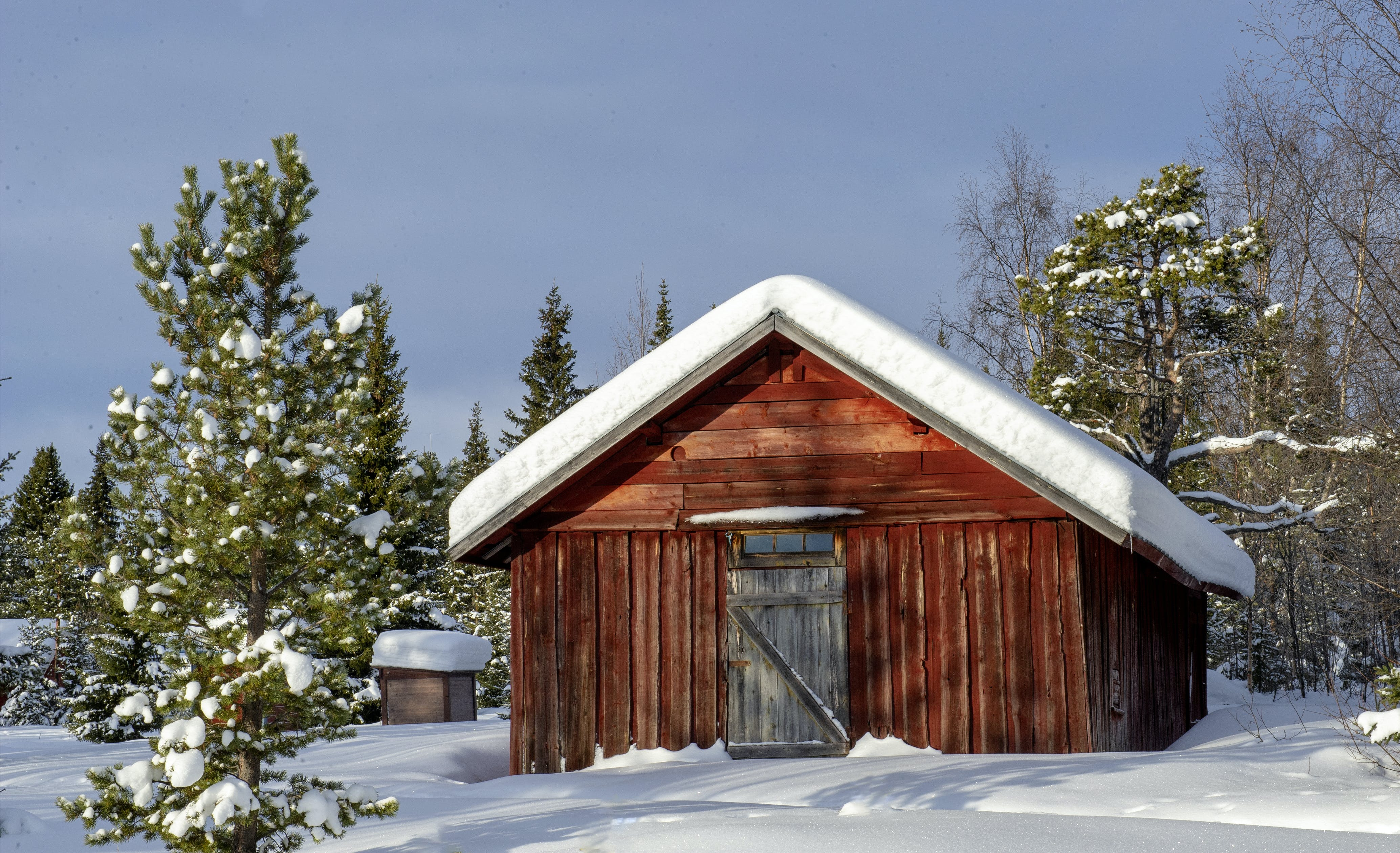Wooden Shed Surrounded by Trees