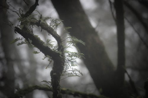 Kostnadsfri bild av dimma, mystisk skog, ormbunke, skog