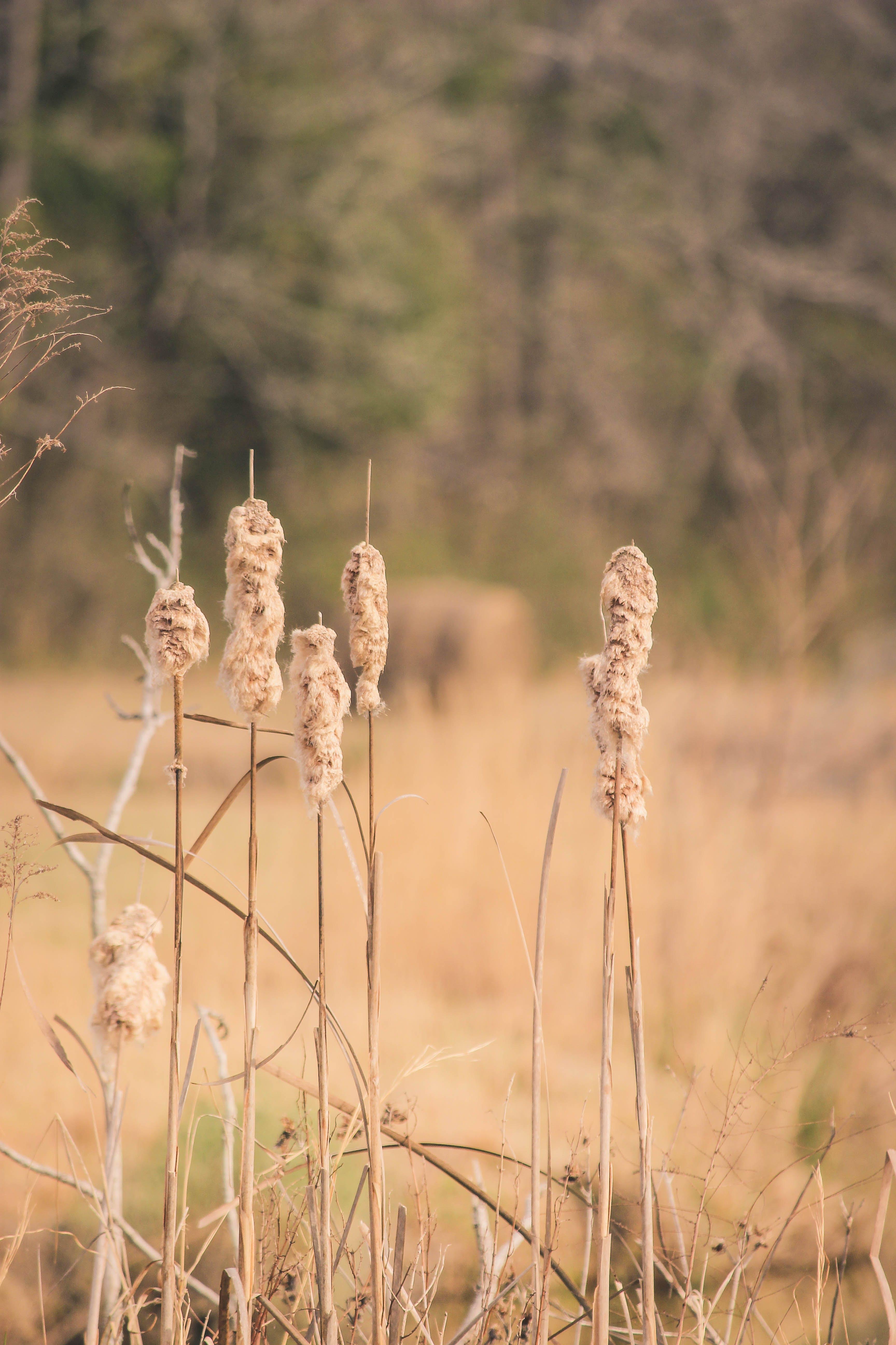 Δωρεάν στοκ φωτογραφιών με αγροτικός, τοπίο