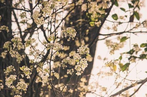 Immagine gratuita di albero floreale, albero in erba, floreale bianco