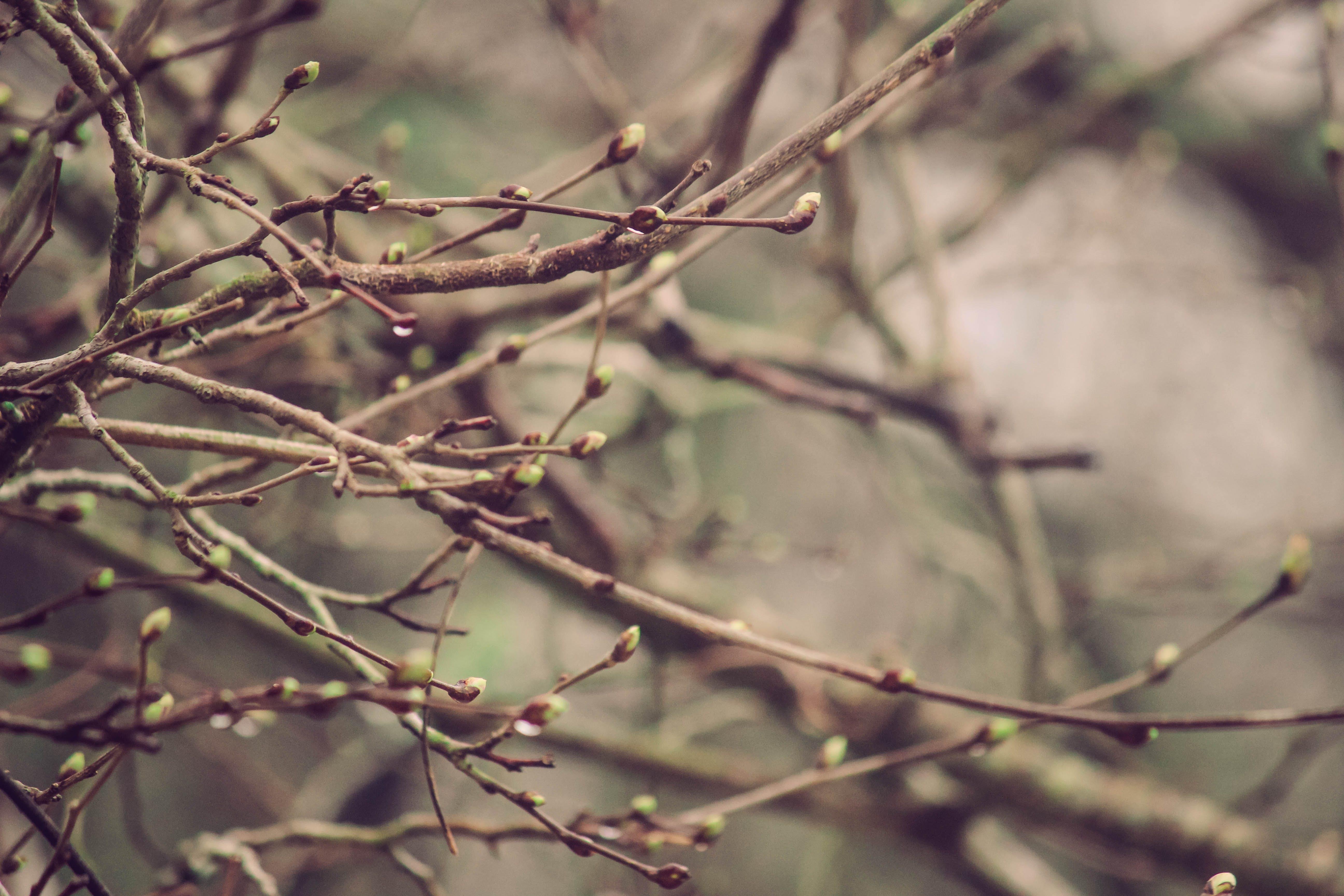 Δωρεάν στοκ φωτογραφιών με κλαδιά, μούρα
