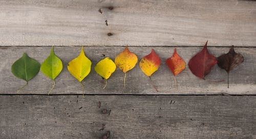 Immagine gratuita di colori autunnali, foglie autunnali, foglie di gree, foglie morte