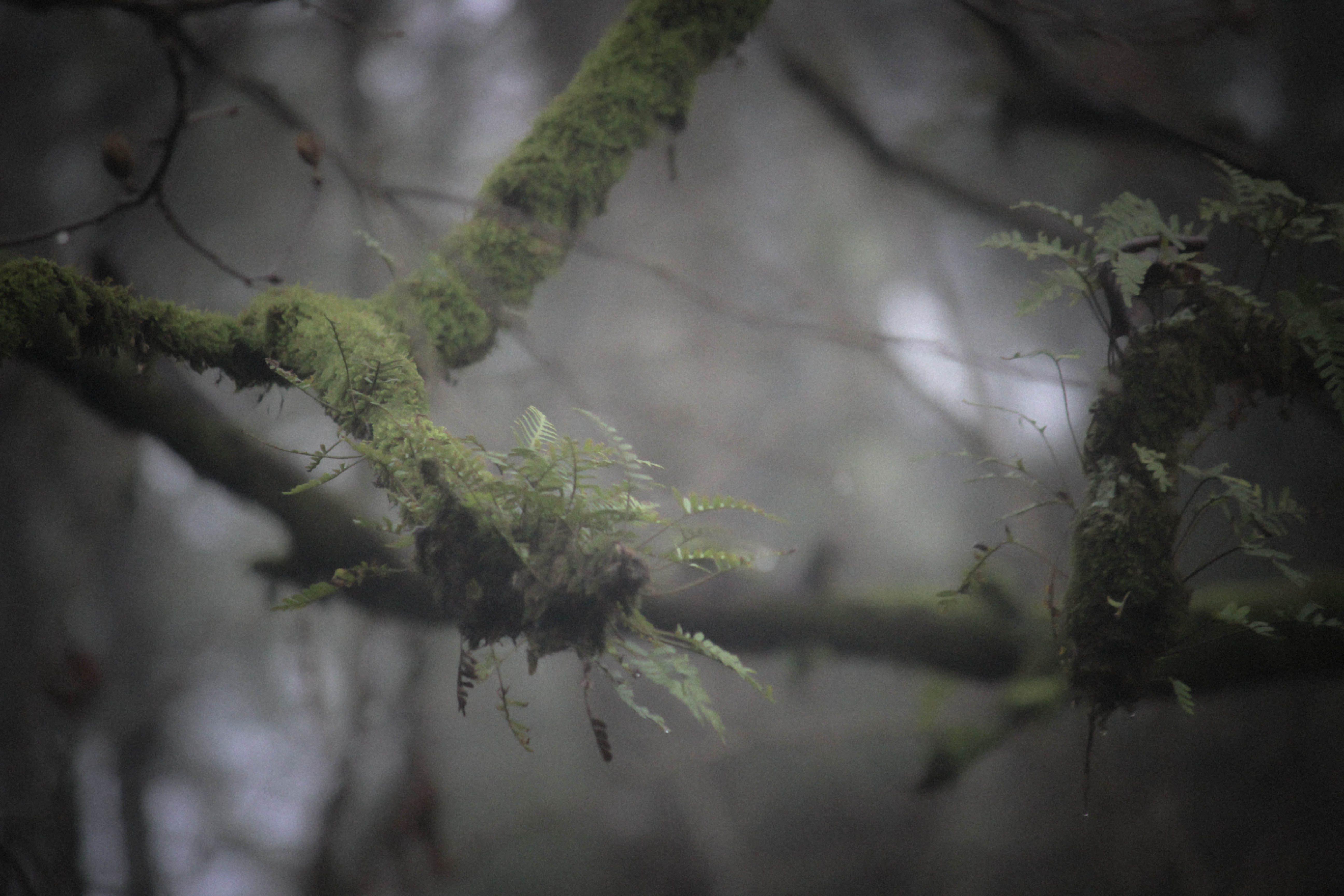 Green Fern on Branch