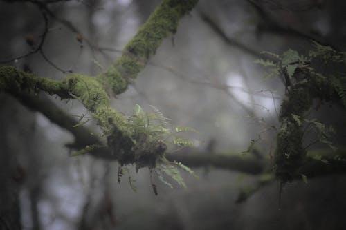 Immagine gratuita di albero, muschio, natura, nebbia
