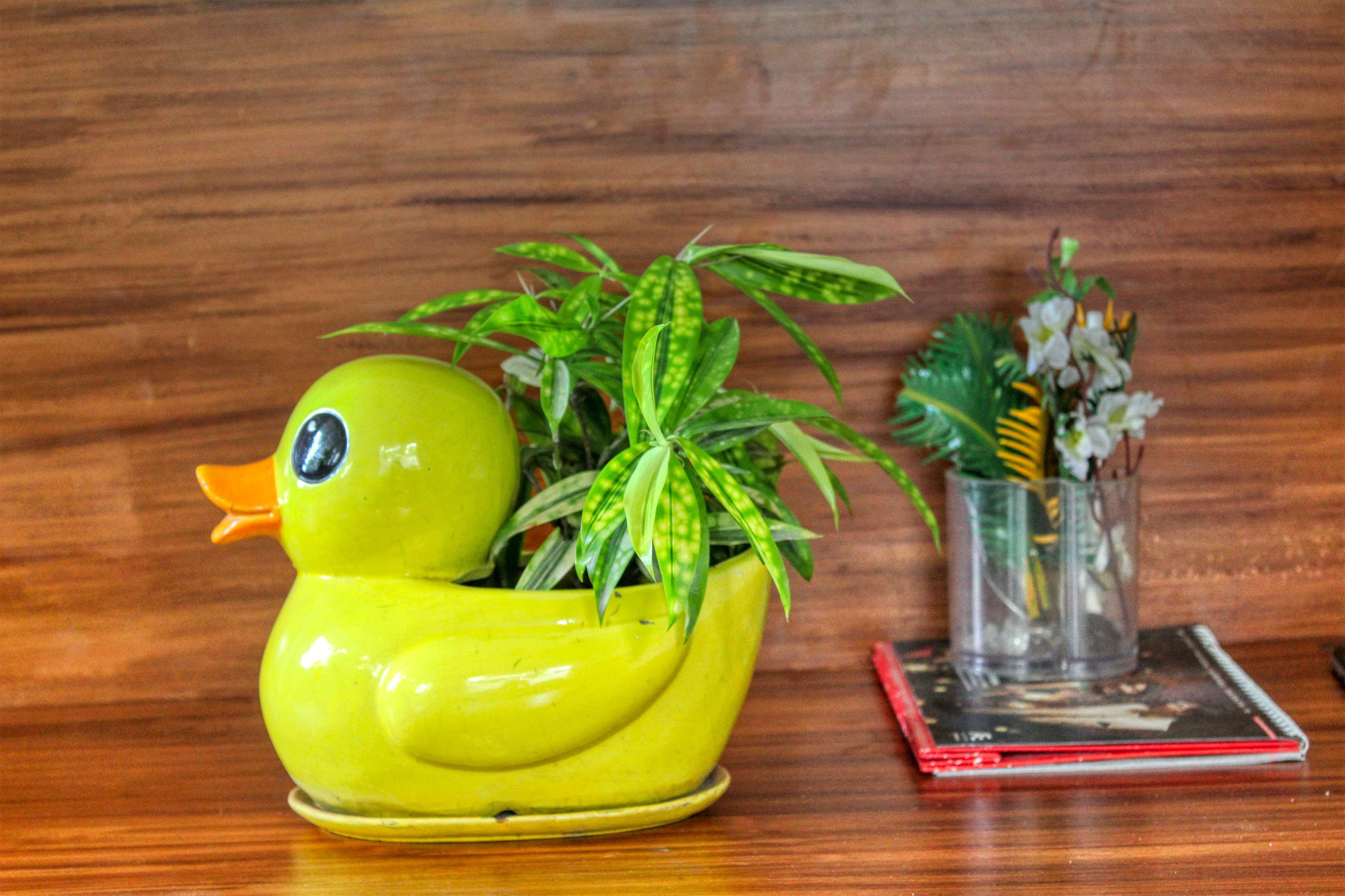 Free stock photo of close up, interior, natural, ornamental plant
