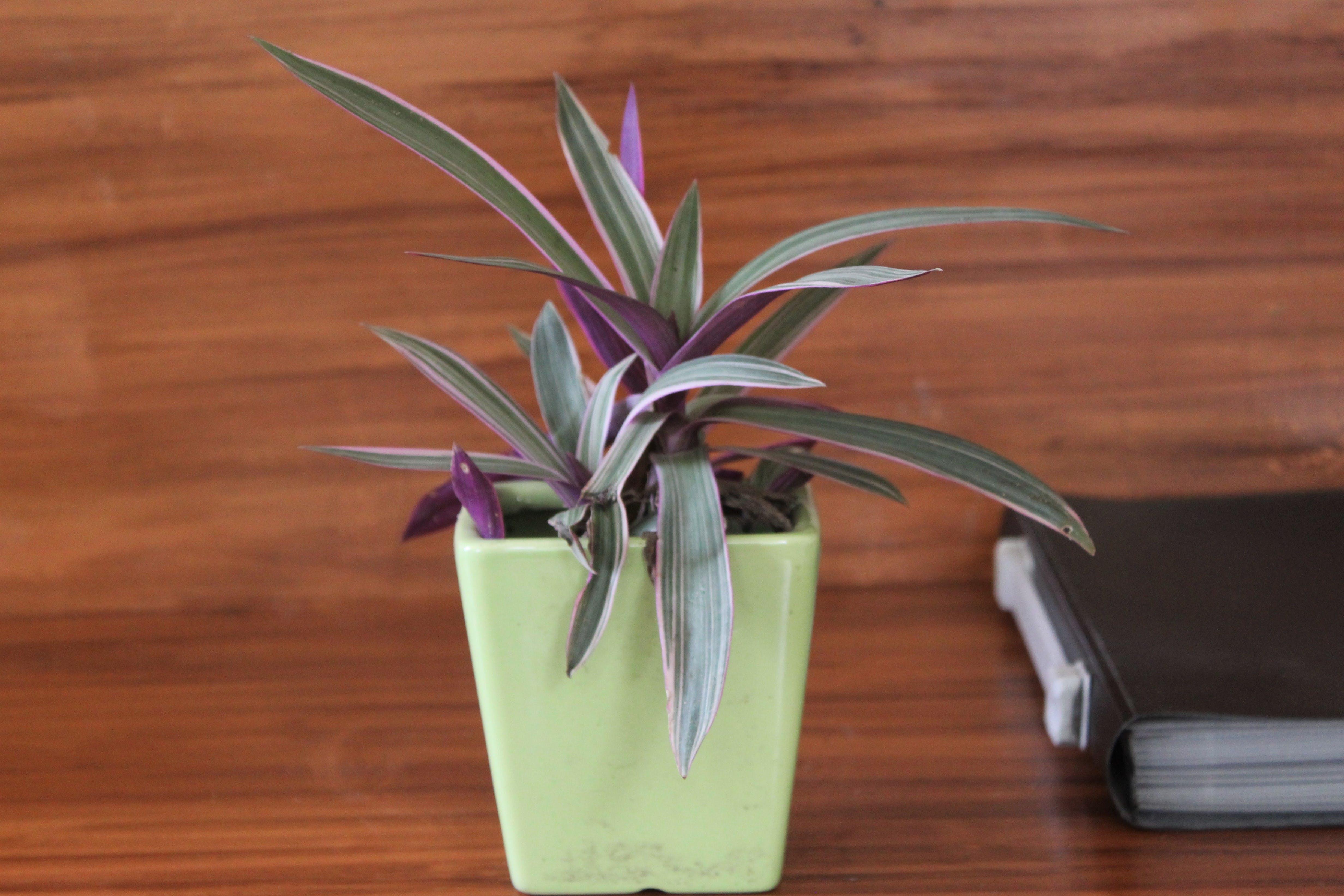 Free stock photo of beautiful plants, close up, interior, nature