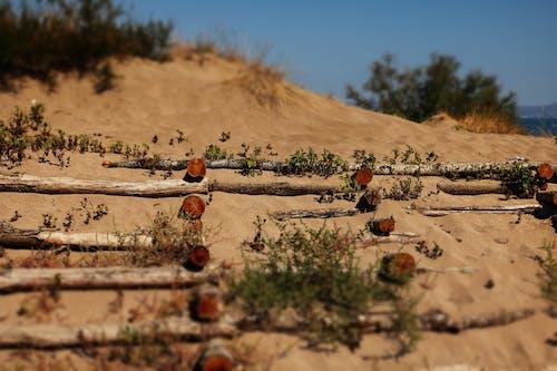 Kostnadsfri bild av loggar, lutning/förskjutning, sand, strand