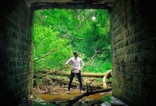Gratis stockfoto met Bos, fashion model, groen bos, Indië