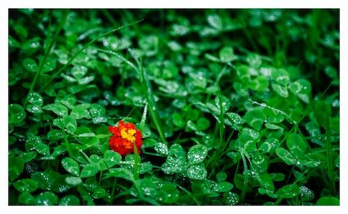 Gratis stockfoto met bloeien, bloem, bloesem, flora