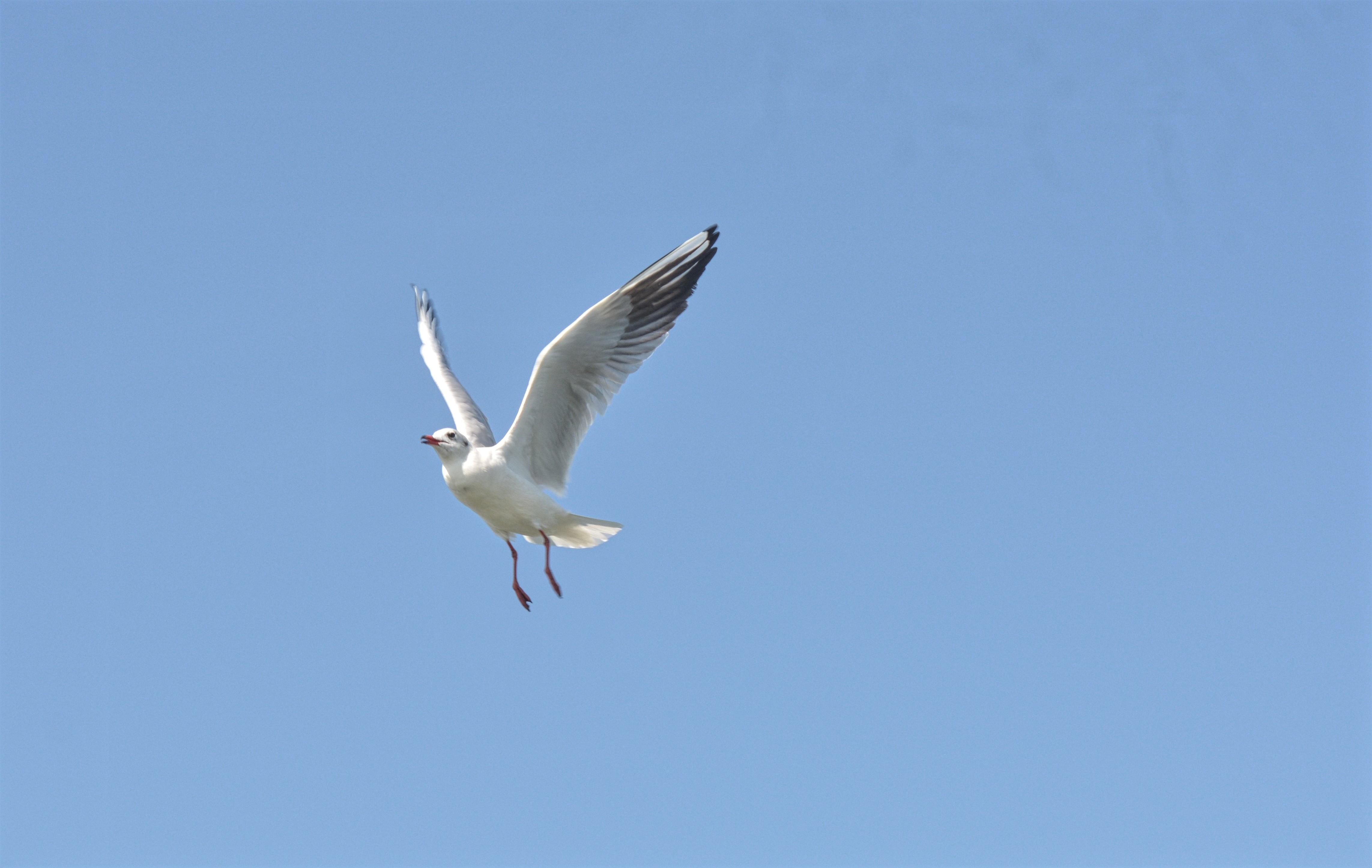 Free stock photo of bird, sky bird.
