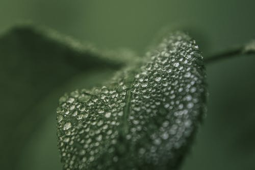 Macro Photography Of Dew Drops On Green Leaf