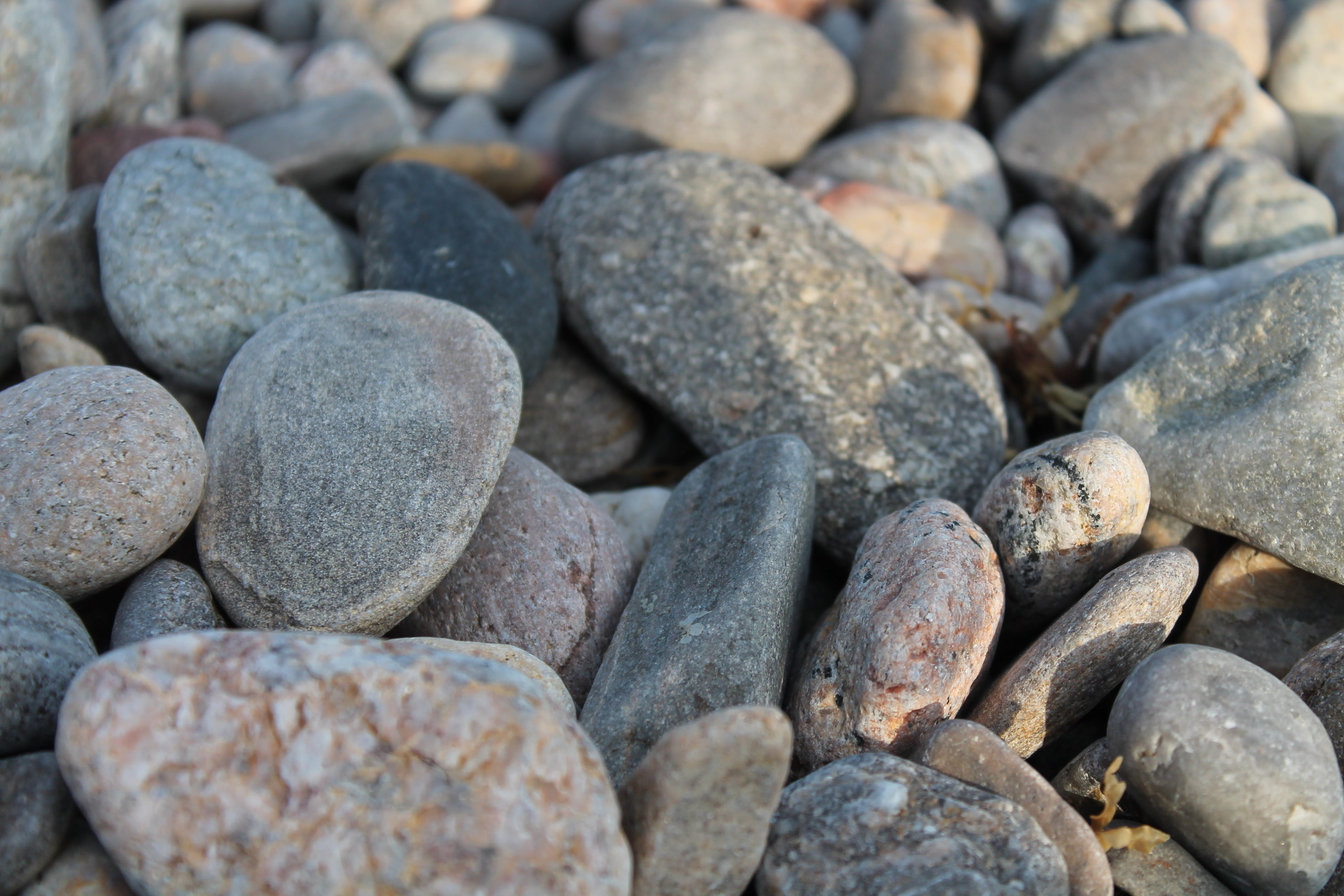 돌, 집중의 무료 스톡 사진