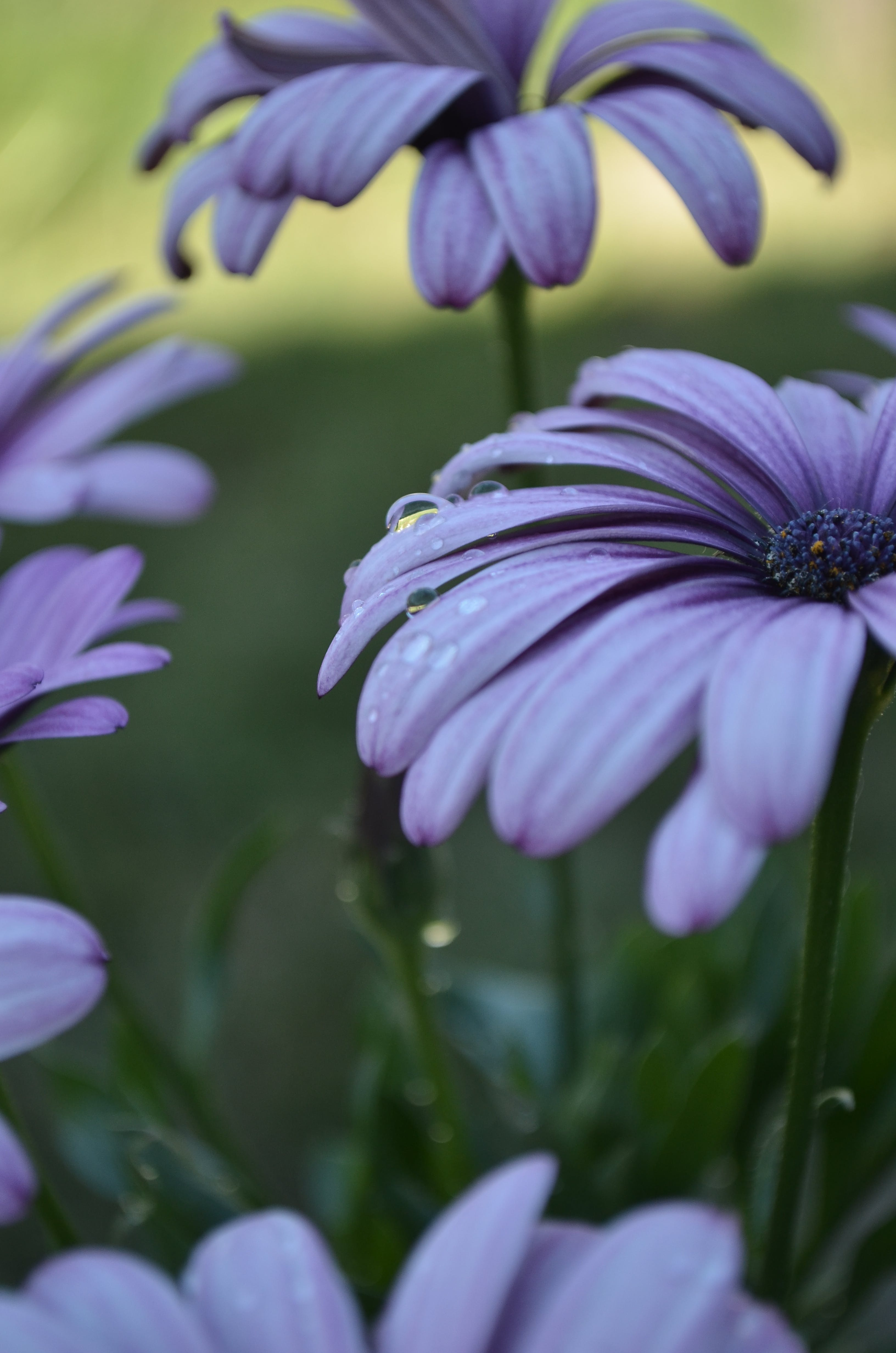 Free stock photo of flower, nature, violet