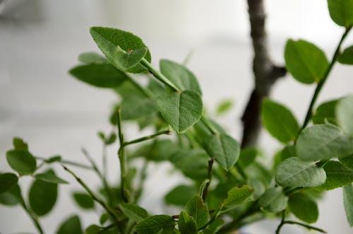 Kostnadsfri bild av flora, gren, grön, närbild
