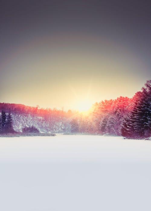 Gratis lagerfoto af aftensol, frossen, iPhone-baggrund, vinter