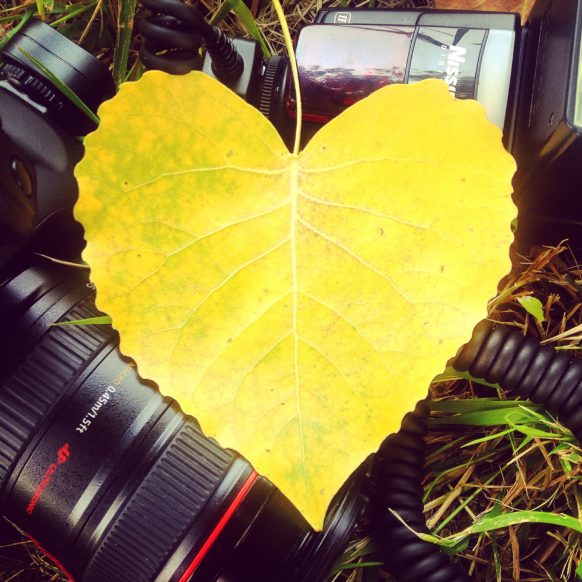 canon, flash, foliage