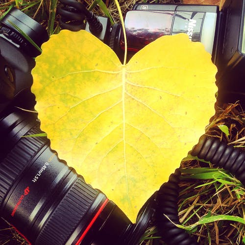 Бесплатное стоковое фото с canon, instagram, вспышка, желтый