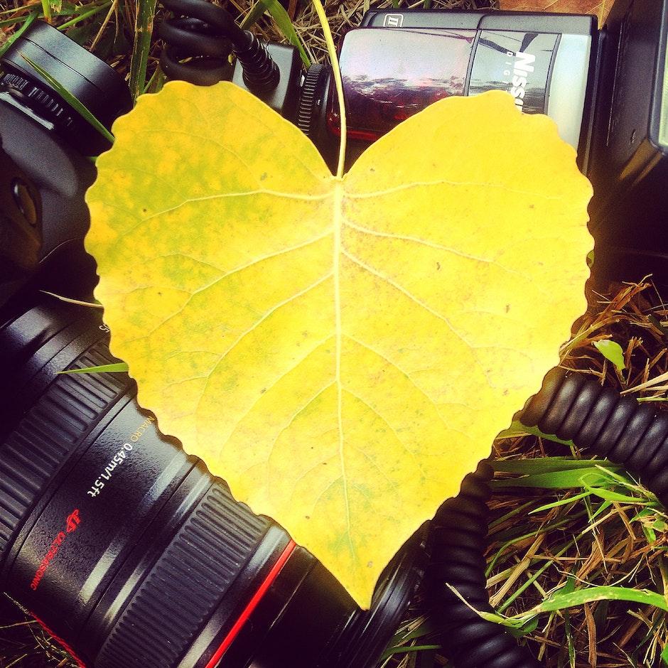 canon, flash, foliage