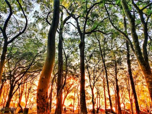 gün doğumu, Günaydın, Güneş, orman içeren Ücretsiz stok fotoğraf