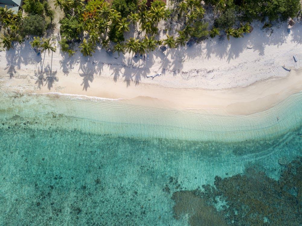 drzewa, drzewa kokosowe, fotografia z drona