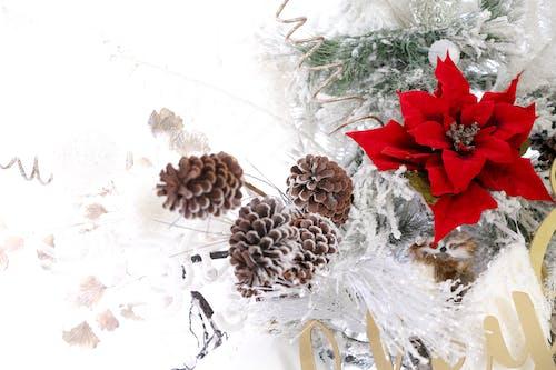 Foto d'estoc gratuïta de arbre de Nadal, fons de nadal, hivern, nadal