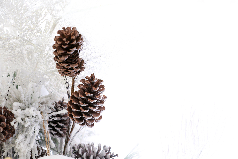 Δωρεάν στοκ φωτογραφιών με ημέρα χριστουγέννων, χειμώνας, χιόνι, χριστούγεννα φόντο