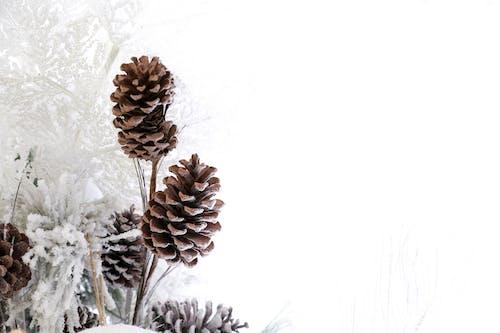 Foto d'estoc gratuïta de decoració nadalenca, dia del Nadal, fons de nadal, hivern