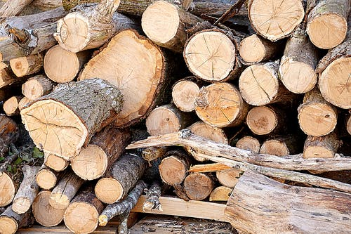 Foto stok gratis batang kayu, batang pohon, dicincang, kayu