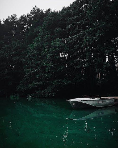 Бесплатное стоковое фото с вода, водный транспорт, водоем, деревья