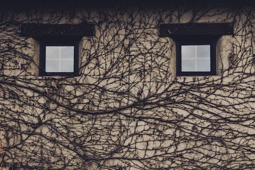牆壁, 視窗 的 免费素材照片