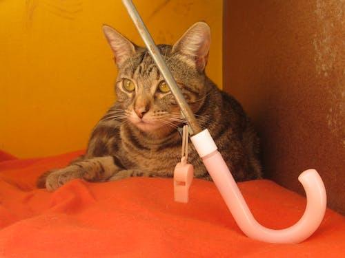 Ilmainen kuvapankkikuva tunnisteilla gata, kissa
