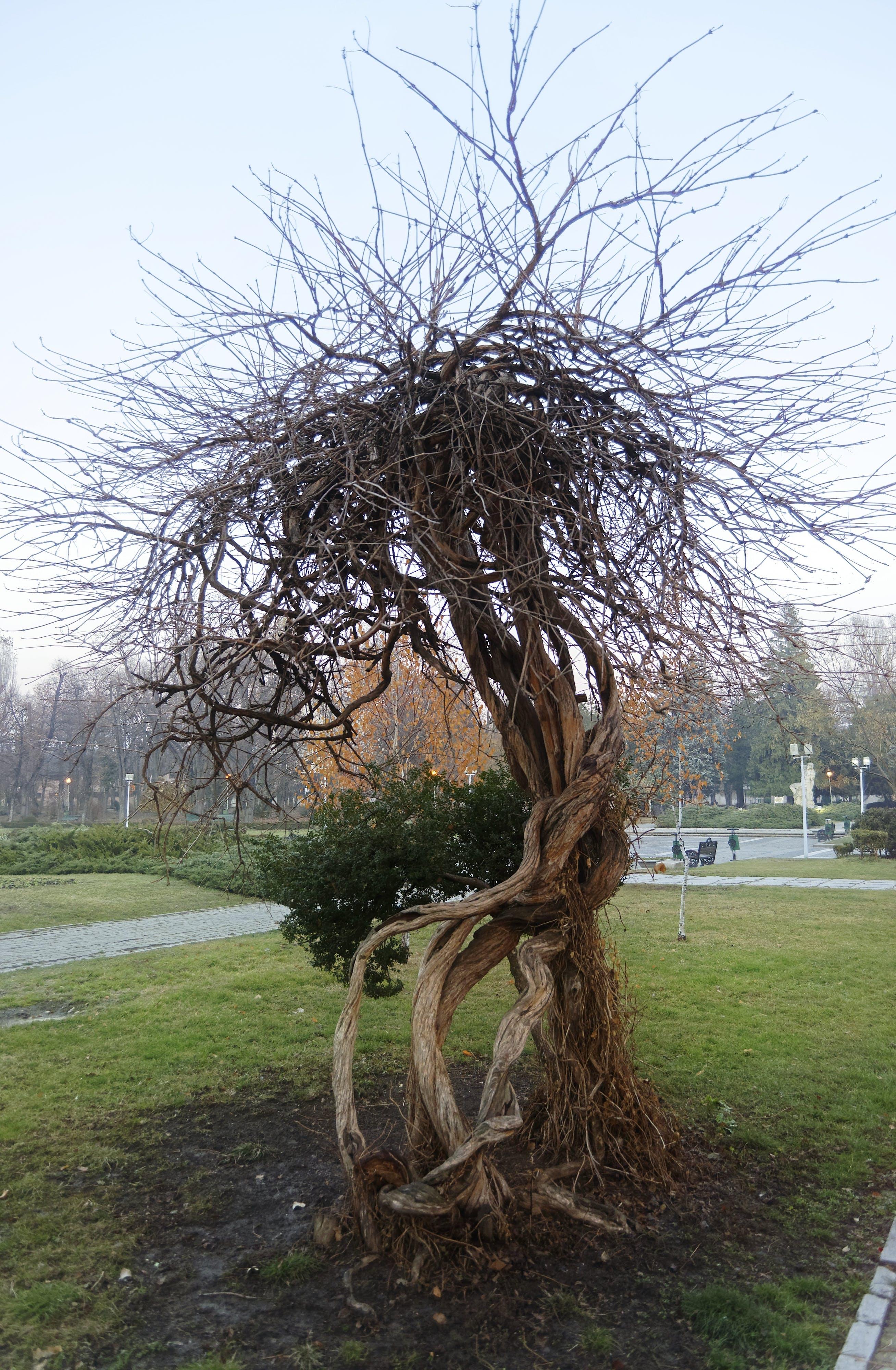 Free stock photo of nature, park, tree, winter