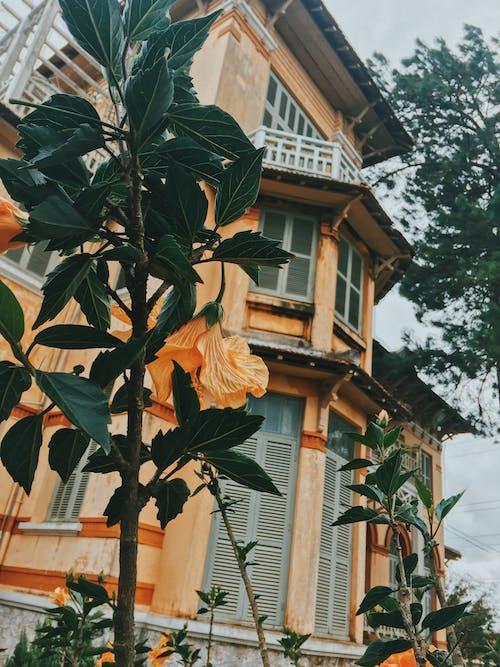 Foto profissional grátis de arquitetura, árvore, balcão, construção